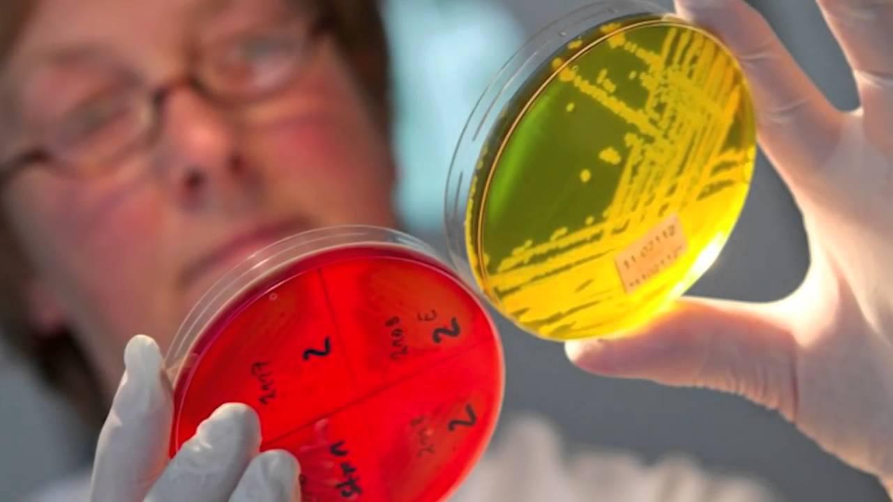 ГЛИСТЫ — симптомы, профилактика и лечение глистов